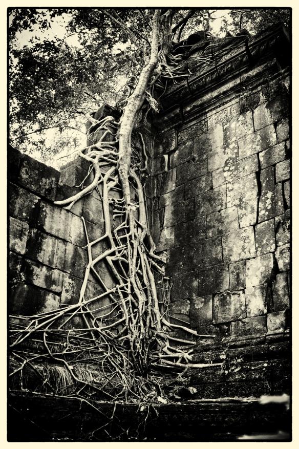 Tree1-BM