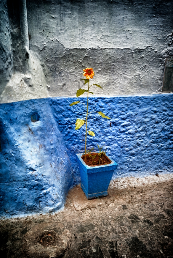 Chefchaouen4-Sunflower