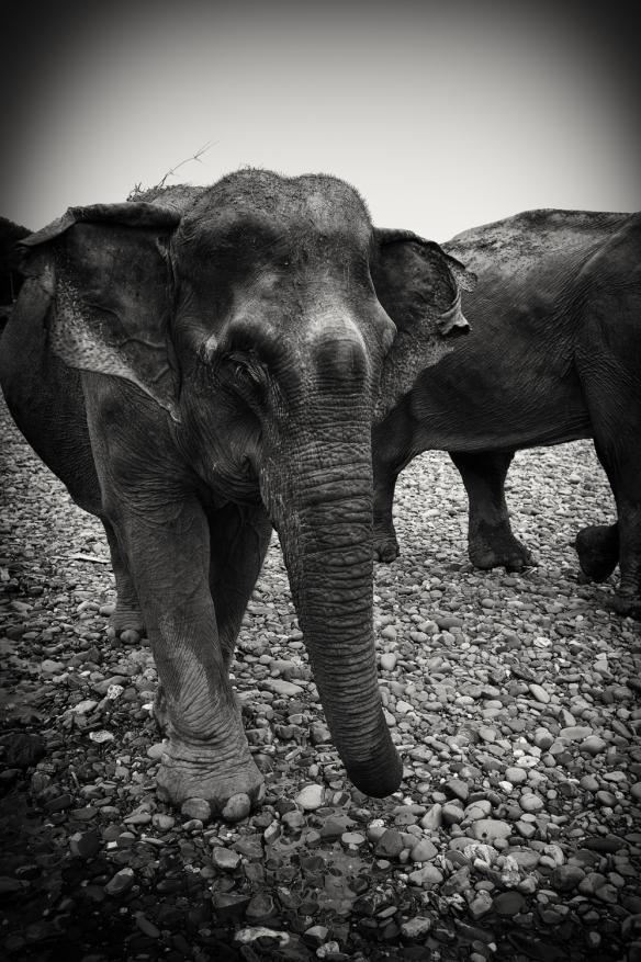 elephantsrcoming